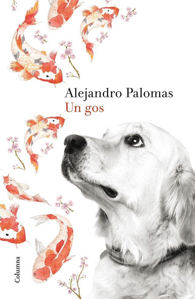 http://www.llibres.cat/imagenes/poridentidad?identidad=6ea653ee-b89b-411f-a3f0-6aa57282afc6&ancho=900&alto=